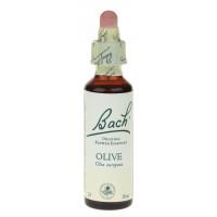 n° 23 - Olive - Olivier