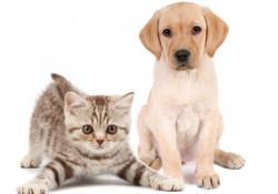 Vermifuges chiens et chats